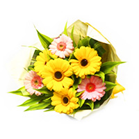 Yellow & Pink Gerberas Flower Bunch (08-nos)