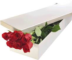 Six Red Roses In Paper Box