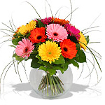 Twelve Mixed Gerberas in a Glass Vase