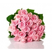 25 Pink Roses Bunch