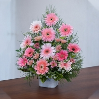 Pink Jebra and Chrysanthemum Mixed Basket