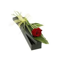 Single Red Rose in Paper Box