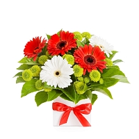 Red & White Gerberas Flower arrangement (08-nos)